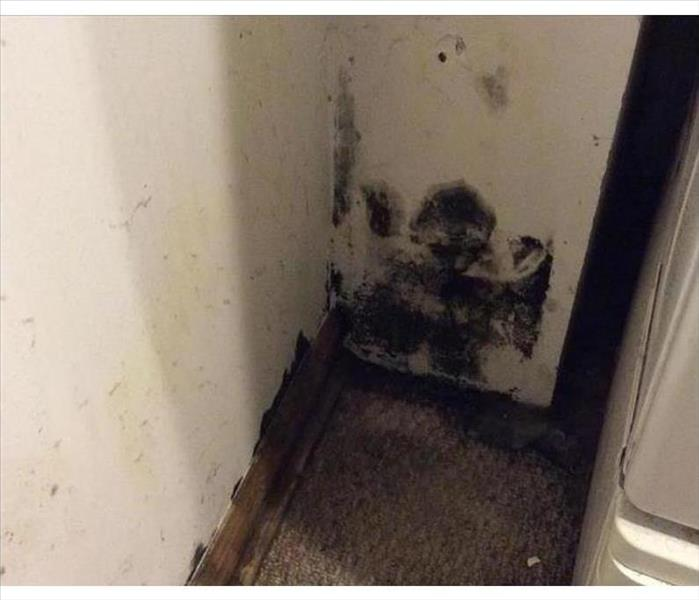 Mold Damage is Common in Rogers, AR Laundry Rooms Before