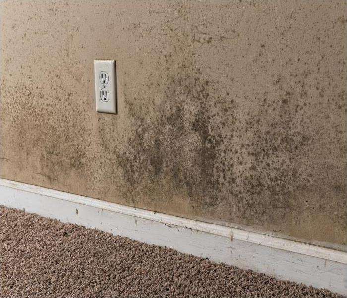 Mold Remediation When Flooding Leads To Mold Damage In Your Bella Vista Property
