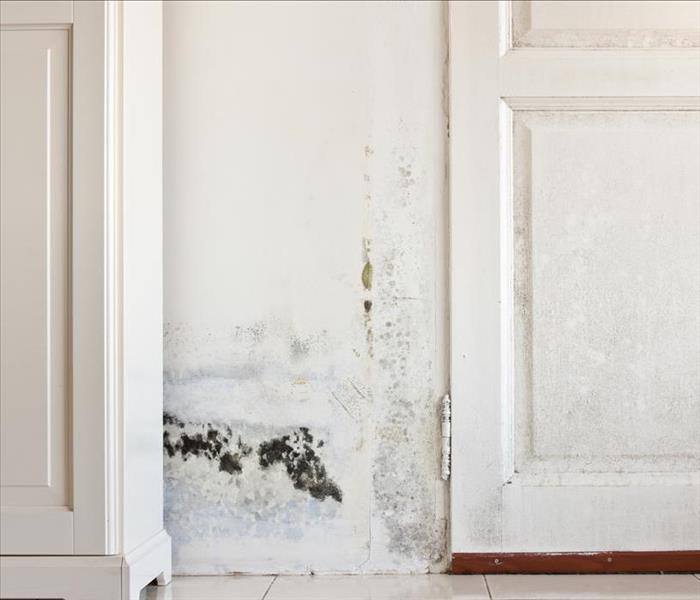 Mold Remediation Actions to Help Prevent Mold Damage in Rogers