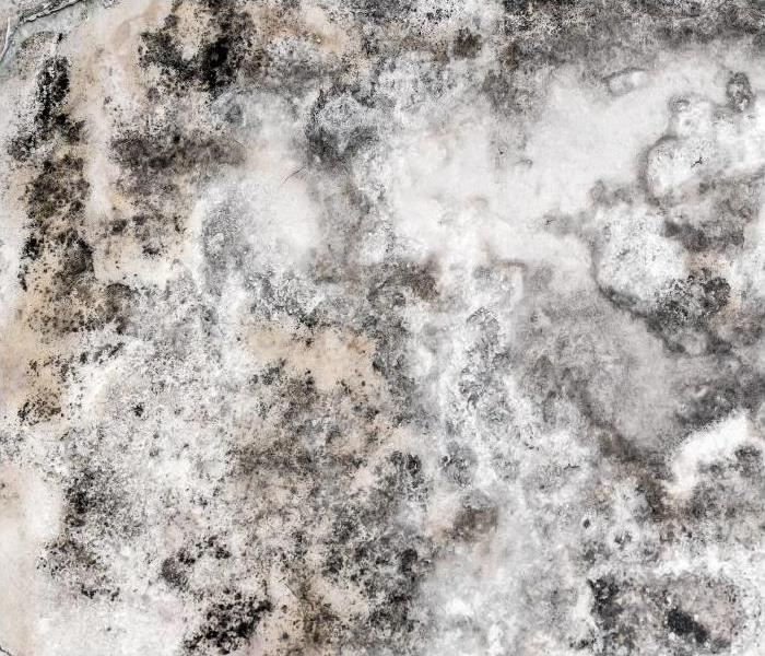 Why SERVPRO If Mold Has Taken Over Your Apartment In Bentonville, Call Our Professionals!