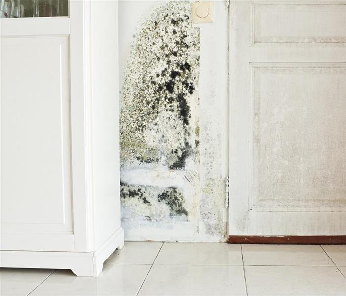 Mold Remediation Addressing Bad Odors through Remediation of Mold Damage in Bella Vista Homes