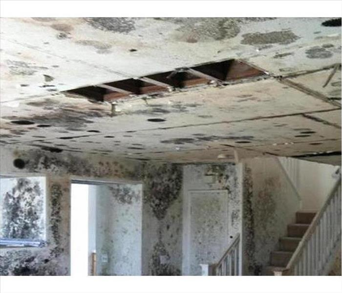 Mold Remediation Bentonville Mold Proliferation Factors