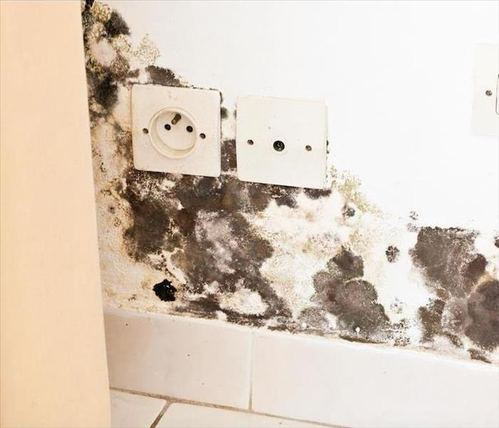Mold Remediation What to Expect from Our Bella Vista Mold Damage Remediation Crew