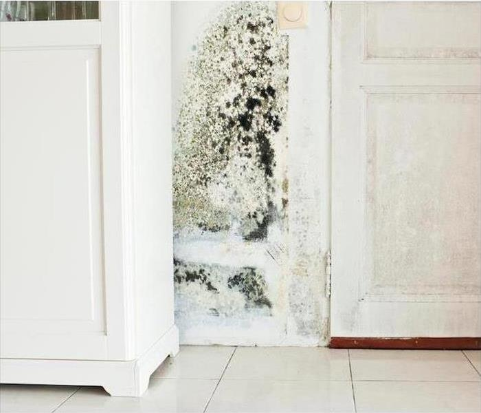 Why SERVPRO Mold Remediation Services Available Throughout the Bentonville Area