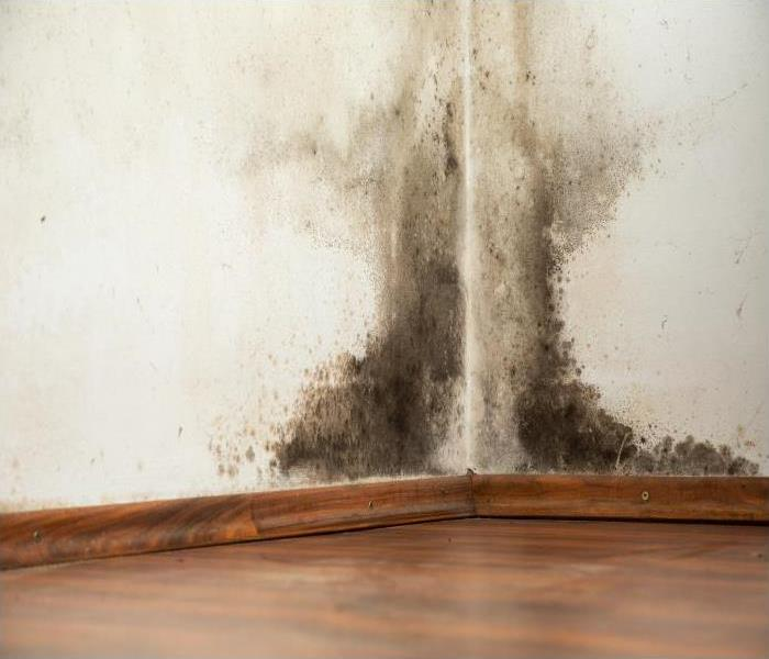 Mold Remediation Our Crew Is Your Best Option When Mold Causes Damage To Your Home In Bentonville